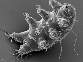 incredible_tardigrades_facts_2